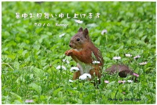 2016-summer3.JPG
