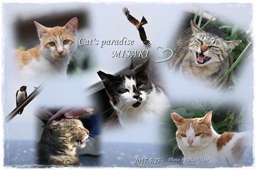 misaki-cats33.jpg